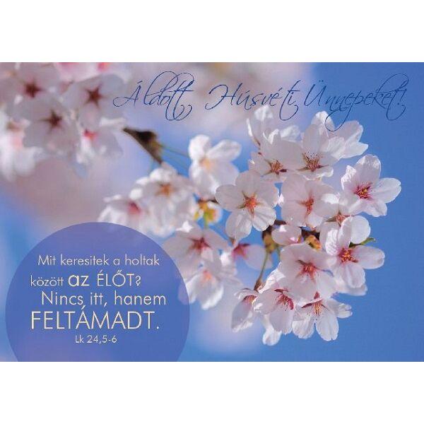 Húsvéti képeslap - Mit keresitek a holtak között