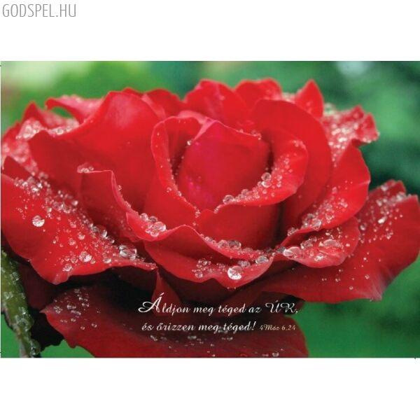 Igés képeslap – Áldjon meg téged az Úr (fekvő)